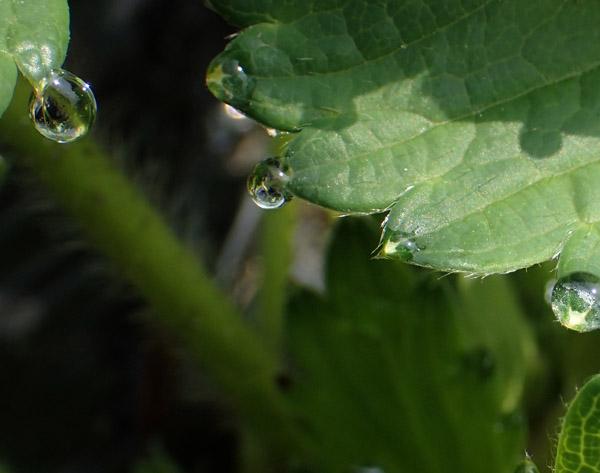 露地イチゴの生育