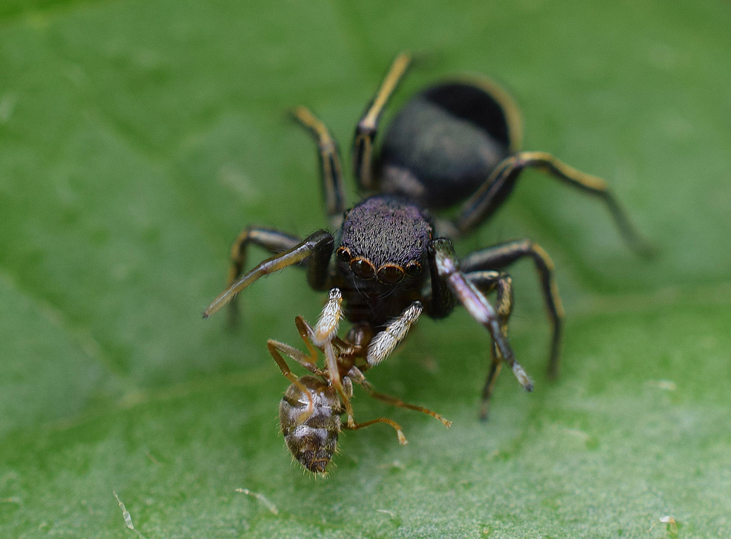 クモとアリの関係