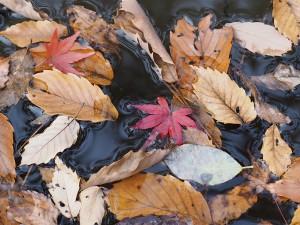 水に浮かんだ落ち葉