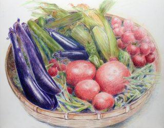 色鉛筆で野菜を描く