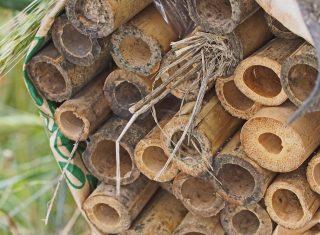 狩りバチがトラップネストにやって来た!