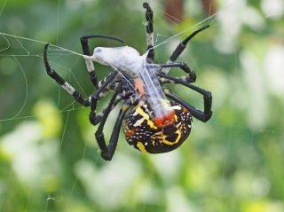 コガネグモの糸