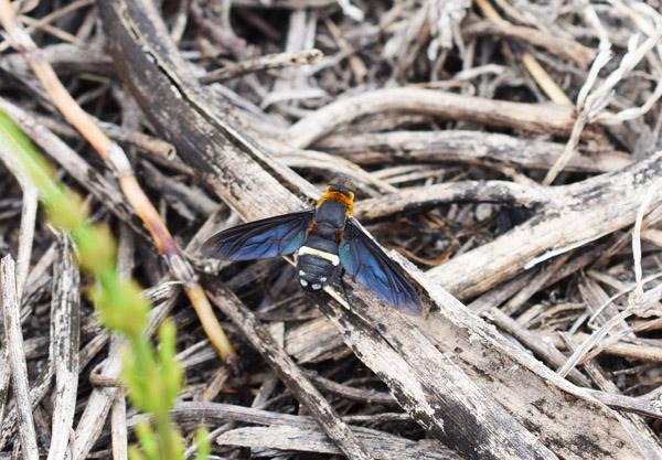 ポタケの昆虫