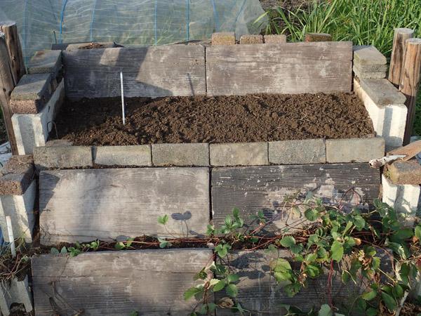 石垣改造とマイマイカブリ幼虫